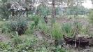 3 dzień wędrowania - Ogród Biblijny w Myczkowcach_2